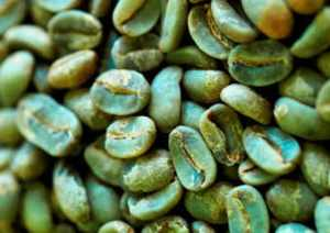 green-coffee-beans
