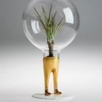 Domsai Matteo Cibic and plant