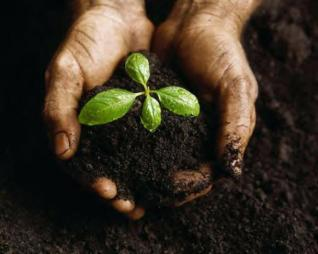 seed_growing