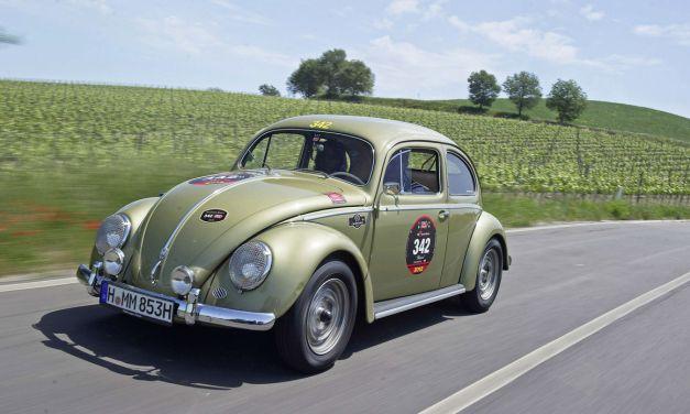 ovali beetle